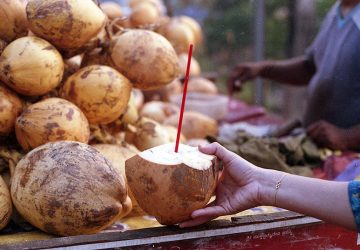 Coconuts in Mangalore